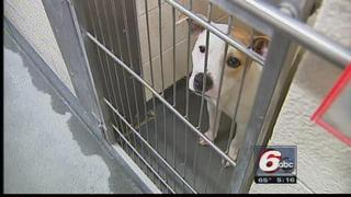 Council-OKs-Shelter-Fee-For-Out-Of-County-Animals-30774874.jpg