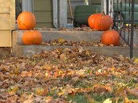 Police issue Halloween warning