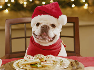 holiday_dog_1354878051307.jpg