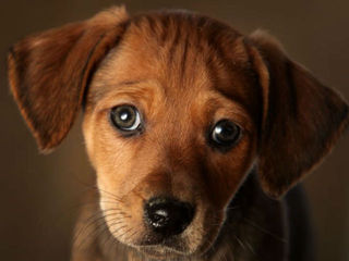 Humane Society releases list of Ohio puppy mills