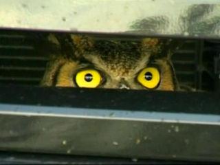 owl3_1360677041709.jpg