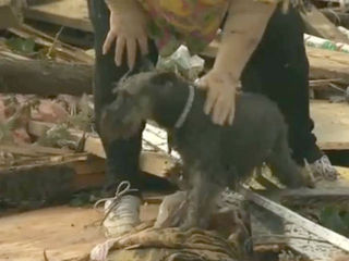 WATCH: Woman, dog reunited after tornado
