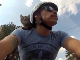 MUST WATCH: Bike-riding cat turns heads