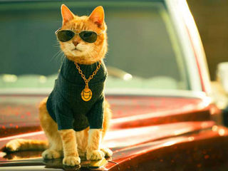 VIDEO: Cool cat helps spread spay-neuter message