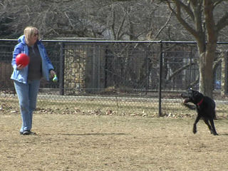 Carmel turns to DNA testing for dog park waste