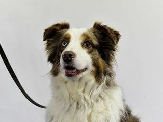 RECALL: Big Dog Natural dog food recalled