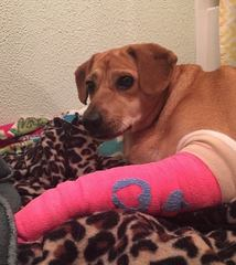 Dog who fell off I-65 overpass out of surgery
