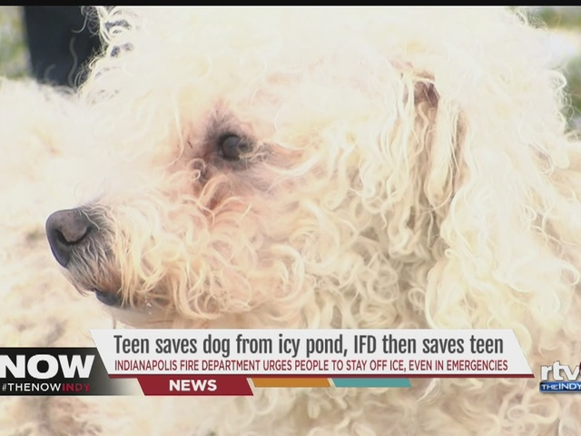 WATCH: Teen takes a dangerous risk to save neighbor's dog from drowning