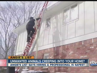 Angie's List: Getting rid of unwanted pests