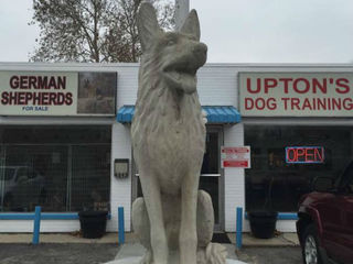 CALL 6: Upton reaches agreement in dog case