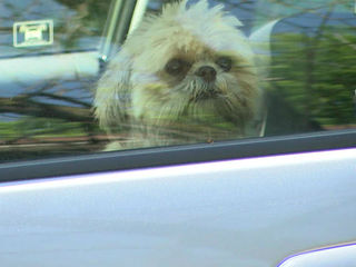IACC, IMPD rescue dog from hot car
