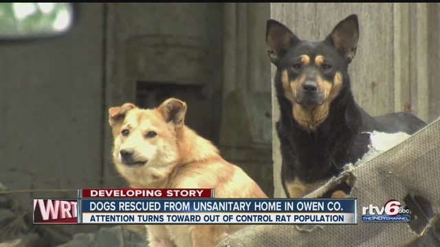Dogs rat infested home
