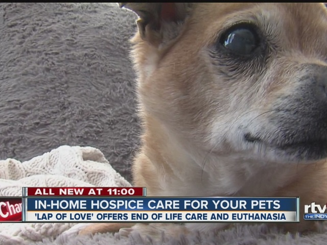 In-home hospice care for your pets