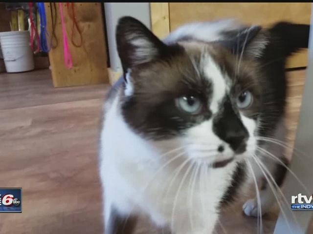 SoBro shop has cat named T.K.