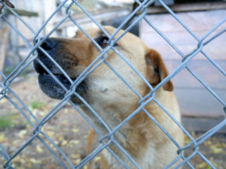 New rules in effect for Marion Co. dog owners