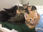 More than 3,000 Indy animals adopted in 2016