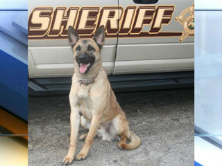 Indiana K-9 dies from heat exhaustion