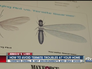 Stopping termites before they come knocking