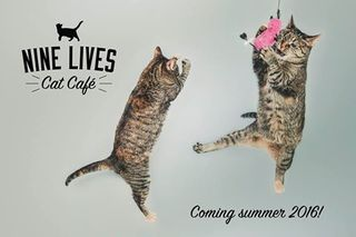 Cats and coffee in Fountain Square