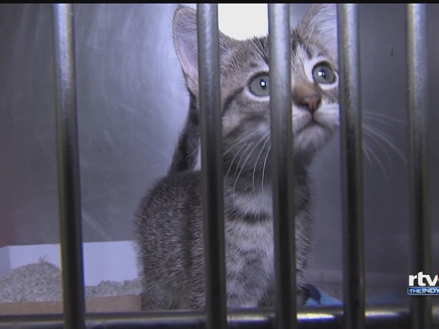 New IACC chief wants to make it a 'no kill' shelter