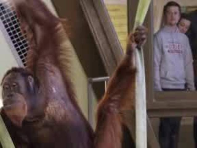Indianapolis Zoo research reveals previously unknown level of vocal…