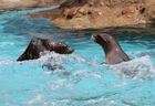 Indianapolis Zoo adds 2 new sea lions