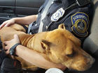 IMPD officer rescues stray, starving dog