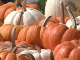 August rainfall boosts pumpkin crop