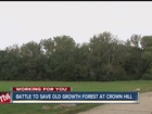 Battle to save old forest at Crown Hill