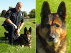 Plainfield PD says goodbye to K-9 officer Aren