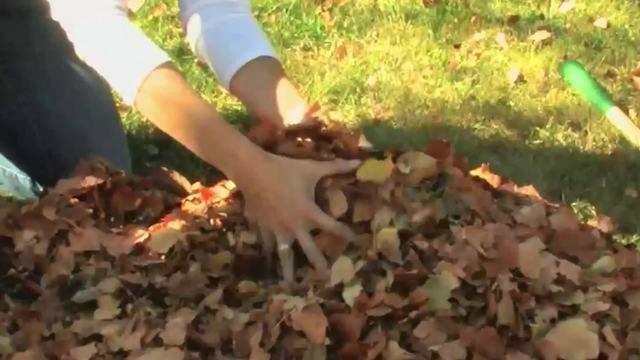 Townwide leaf & brush pick-up scheduled in Seneca Falls