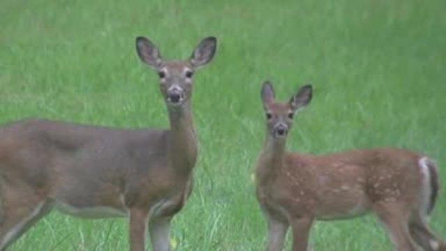 Kansas voters pass amendment on hunting