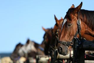 Muncie horse trainer accused of animal abuse