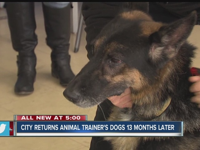 City returns animal trainer's dogs