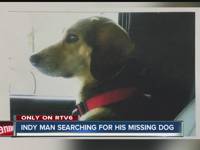 Indianapolis man searching for lost dog