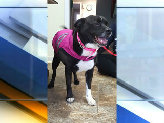 Abused dog gets new home after years at shelter