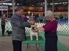 Dogs strut their stuff at the State Fairgrounds