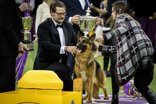 PHOTOS: 2017 Westminster Dog Show