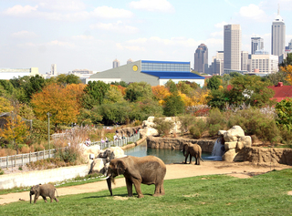 Indy Zoo named one of the 10 best zoos in the US