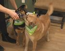 Adopt some love: Rescued dogs ready for new home