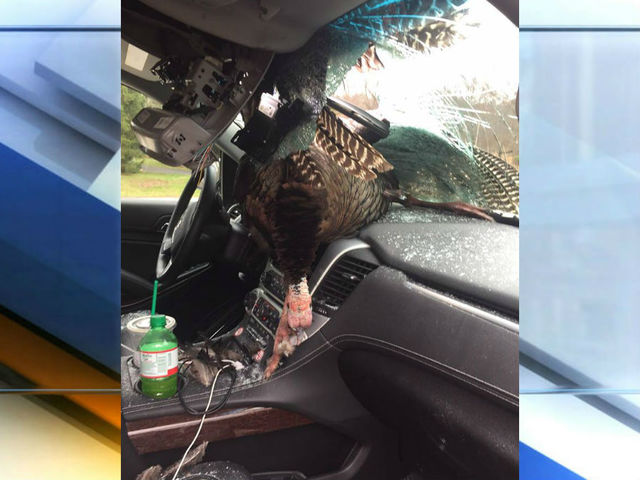New Jersey family gets surprise, a turkey through windshield