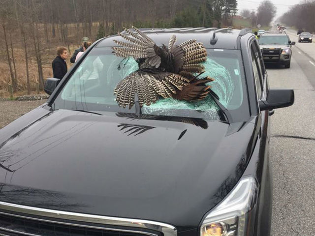 Family avoids injury when turkey crashes through windshield