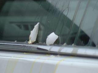 Egg-throwing vandals target dozens of vehicles