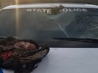 Another turkey flies into car windshield