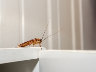 Pests can get in through your HVAC system