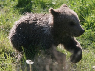 Ind. facility under investigation for bear abuse