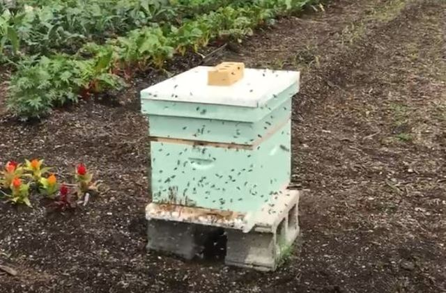Thousands of bees gone from Broad Ripple business after ...