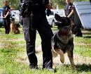 Deputy disciplined after K9 bites another deputy