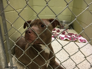 PHOTOS: Adopt love for $5 in Muncie this weekend