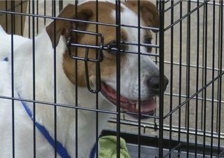 PHOTOS: Faces of the Indy Mega Adoption event